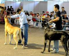All set to hold Dog Show on Jan 21