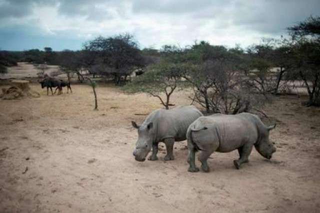 Minor decrease in rhino poaching for 2017